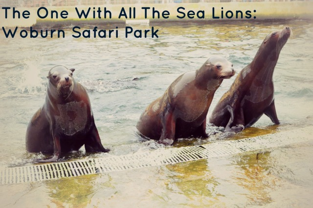 Sea Lion Cover Photo